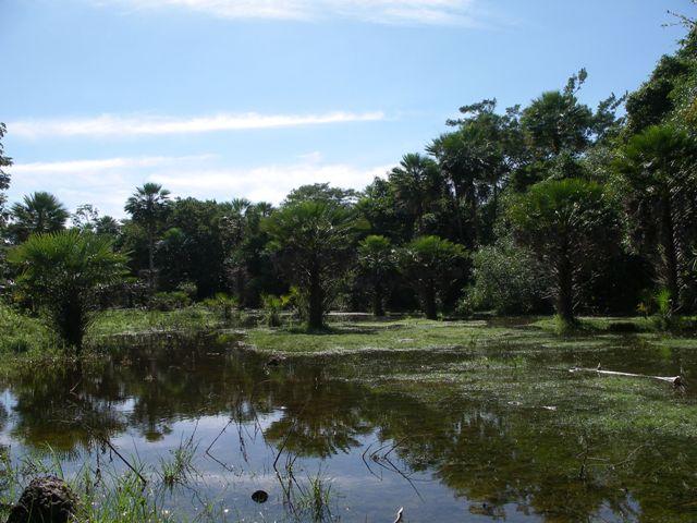 Pantanal_Wasserl