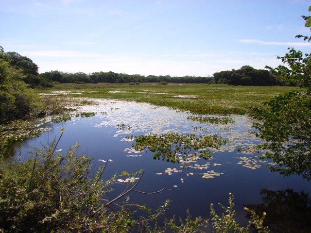 Pantanal_Wasserl1
